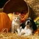 5th Annual Howloweenie PET Adoption and Vendor EVENT