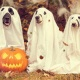 Halloween Yappy Hour at Lone Star Court
