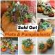 Pints & Pumpkulents