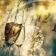 Sunrise Rotary New Year's Eve Masquerade Ball
