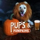Pups 'n Pumpkins