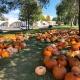 Fall Pumpkin Patch Benefiting Habitat Denver
