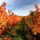 Thanksgiving Wine Tasting at Armature Works