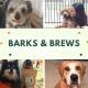 Barks & Brews at Engine 15