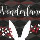 Sea Life by Starlight in Wonderland