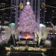 2019-2020 Holidays & New Year's Eve celebrations