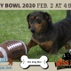 Woofball Puppy Bowl at Dog Bar