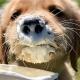 BYOD Austin Bark in Zilker Park Pawty (FREE PUPpuccinos)