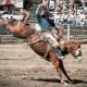Busch Rodeo