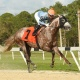 Stakes Saturday at Tampa Bay Downs- March 7th
