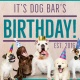 4th Anniversary Pawty at Dog Bar!