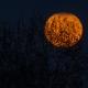 NOCHE DE LOS MUERTOS: NIGHT OF THE DEAD HALLOWEEN PARTY