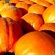 14th Annual Pumpkin Patch