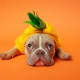 Halloween and Fall Pet and Family Photos