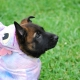 Halloween Pet Photo Day Woof Gang Bakery Hamlin