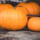 Faithview Baptist Pumpkin Patch 2020
