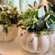 Pumpkins & Succulents A Fall Succulent Styling Workshop!