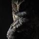ARC's Owl-O-Ween