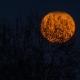 Cruiser Boo! Looza! Halloween !!!
