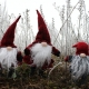 Holiday Movie Night: ELF! presented by AdventHealth