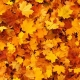Fall Festival Drive-Thru