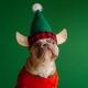 Adopt A Puppy Christmas Brunch