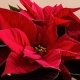 DIY Floral Christmas Workshop @ M&M Farms