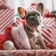4th Annual Pictures with Santa Paws at Ballentine Bark Park Norfolk 2020