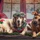 Ocala Great Dane Club Dress your pooch up for Christmas