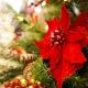 Christmas Day Brunch @ Mesler
