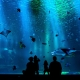Go Wild Weekend at Clearwater Marine Aquarium