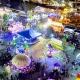2021 Florida State Fair