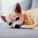 The Dog Bar Cinco De Mayo Chihuahua style Celebration!