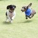 Florida Wiener Dog Derby XI (FWDDXI)