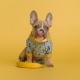 French Bulldog Meetup at Pups Pub!