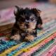 Taco 'Bout Pups Cinco de Mayo | Two Shepherds Taproom