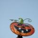 Spooktacular | Avalon Park Orlando