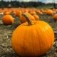 Fall Festival /Pumpkin Patch