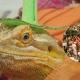 Show Me Reptile & Exotics Show (Janesville) HALLOWEEN SHOW