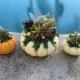 Succulent Pumpkin Sip 'n' Succs Workshop