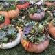 Succulent Pumpkin Workshop Sip 'n' Succs
