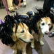 Howl-O-Ween Party