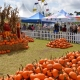 Pumpkins, Hayrides, and Tots, Oh My !!! An Afternoon of Fall Fun!