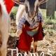 Goat Yoga Nashville- Halloween Spooktacular