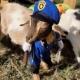 Halloween Spooktacular/Goat Yoga Nashville/Berry Farms/(South Franklin)