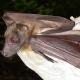 EcoTalk and Walk: Bats!