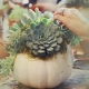 In-Person Pumpkin Succulent Workshop at Union Craft Brewing