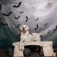 Howl-O-Ween Photos - Mission Bay