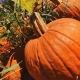 Heartland Charter School-Murray Farms Pumpkin Patch