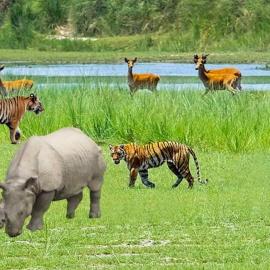 Nepal Tour for Adventurous Wildlife Safari